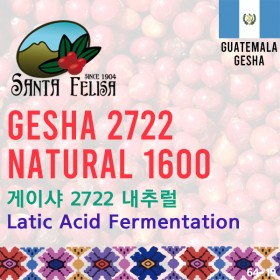 Gesha 2722 Natural 1600 (SOLD OUT)