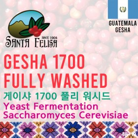 Gesha 1700 Fully Washed