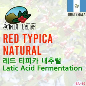 Red Typica Natural Latic Acid Fermentation